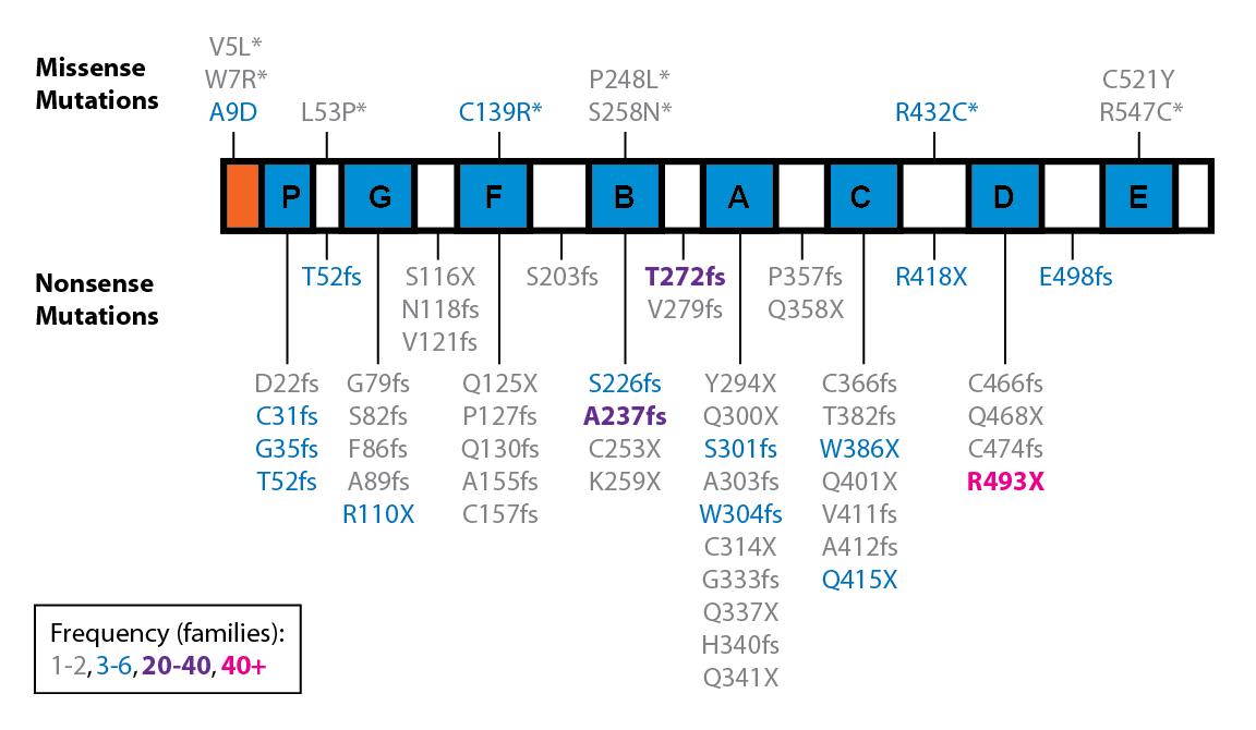 Figure - GRN Mutations